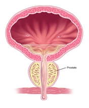 Dennis H  Kim, MD Urology